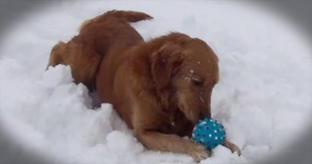 Adorable Dog Is Confused By Squeaky Toy
