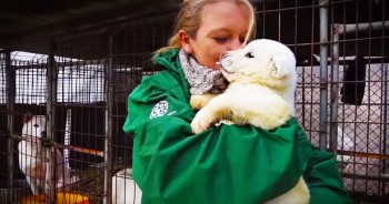 Incredible Rescue Saves Dogs From Meat Farm