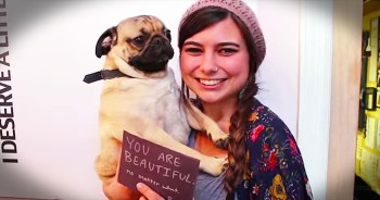 Pug Spreads Inspirational Messages Around City