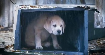 Heartfelt Ad Follows Lost Dog's Journey Home To Best Friend