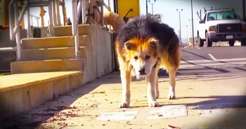 Abandoned Old Pup Had Terrible Life, Until Kind Strangers Come To The Rescue