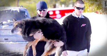 Officers Say An Emotional Farewell To Their German Shepherd Comrade