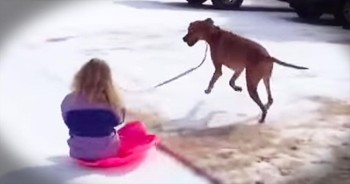 Helpful Pup And His Best Friend Know The BEST Way To Sled