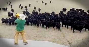 Farmer Derek Helps Cows Combat The Winter Blues With HILARIOUS Serenade