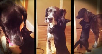 Cat Surprises Dog With Reunion Hug After Being Apart for 10 Days