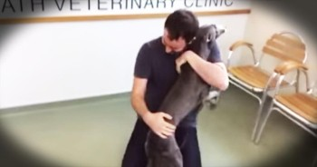 Stolen Dog Has AMAZING Reunion With Owner