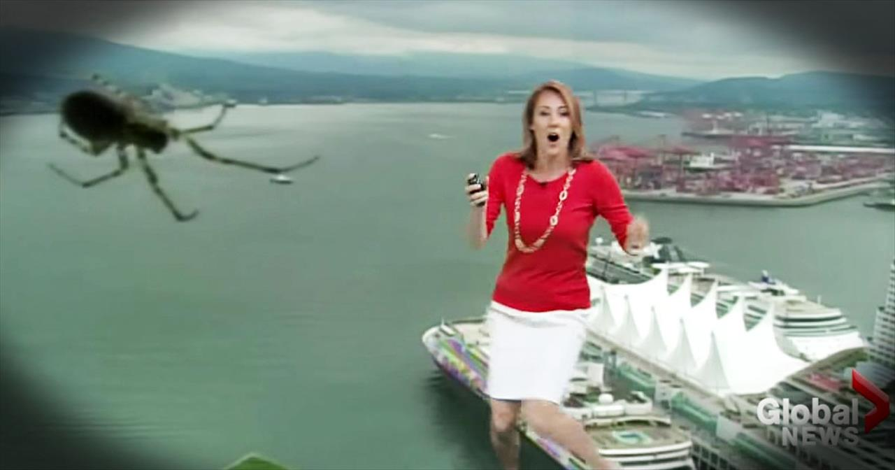 Weatherwoman Is Scared During Live Report By Spider On Weather Camera