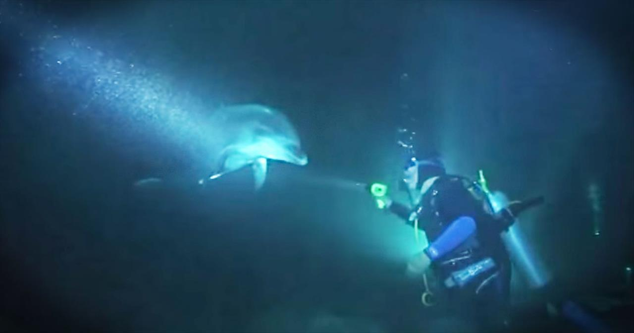 Divers Rescue Bottlenose Dolphin