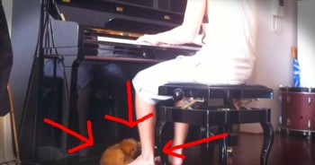 Piano-Loving Puppy Doesn't Want Owner To Stop Playing