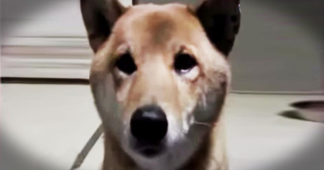 Smart Dog Barks Quieter When Asked