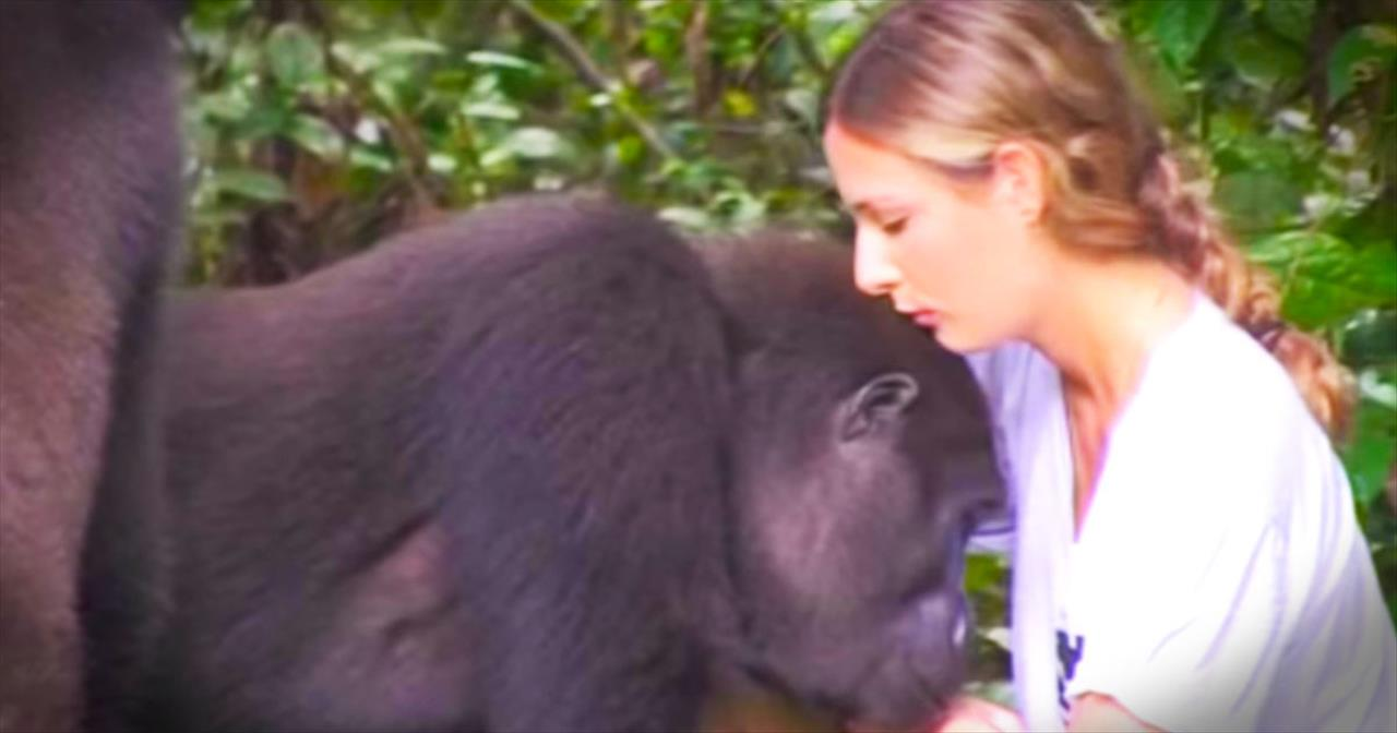 Family Reunites With Gorillas They Saved 12 Years Ago