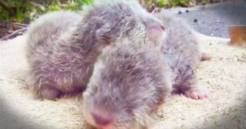 Baby Otters Talk Up A Storm