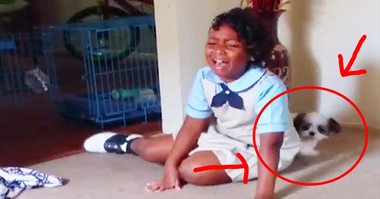 Girl Becomes Emotional After Receiving Puppy Surprise