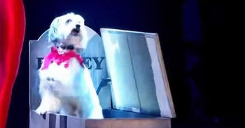 Dancing Dog And His Human Perform Amazing 'Thriller' Routine
