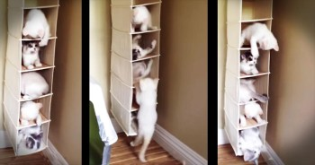 Shoe Rack Becomes Hilarious Kitten Condo