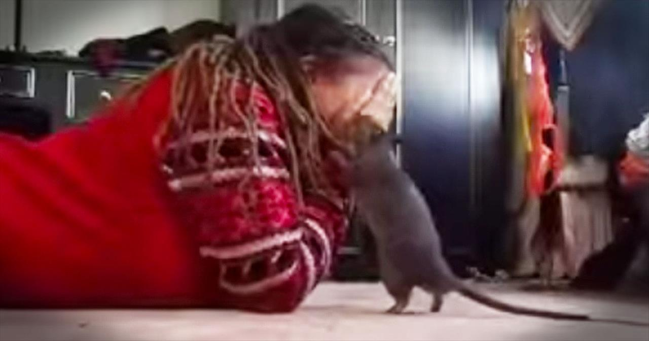 Girl And Her Pet Rat Play Peek-A-Boo