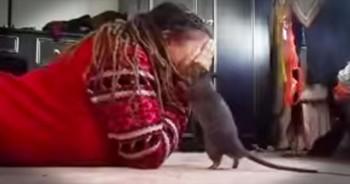 Girl And Her Pet Rat Play Peek-A-Boo