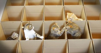Curious Kitties Play In Boxes