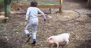 Pearl The Pig Plays Tag With Best Friend Noah