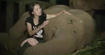 Caretaker Sings Lullaby To Rescued Elephant