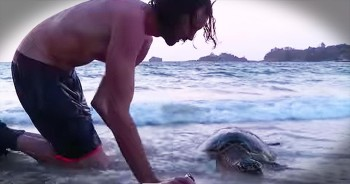 Man Gives Sea Turtle CPR