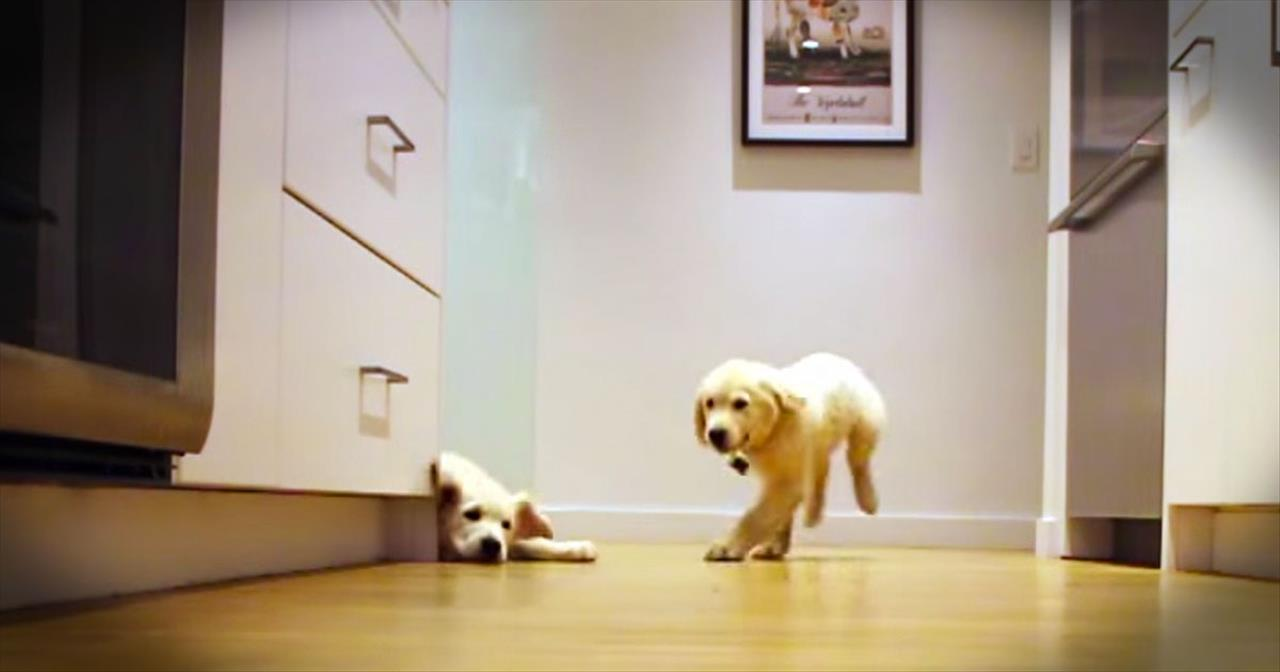 46-Week-Time Lapse Of Dogs Rushing Kitchen To Eat Dinner