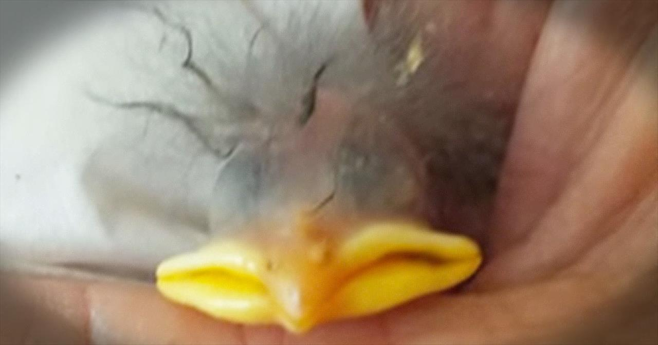 Fuzzy Bird Rescue Will Warm Your Heart