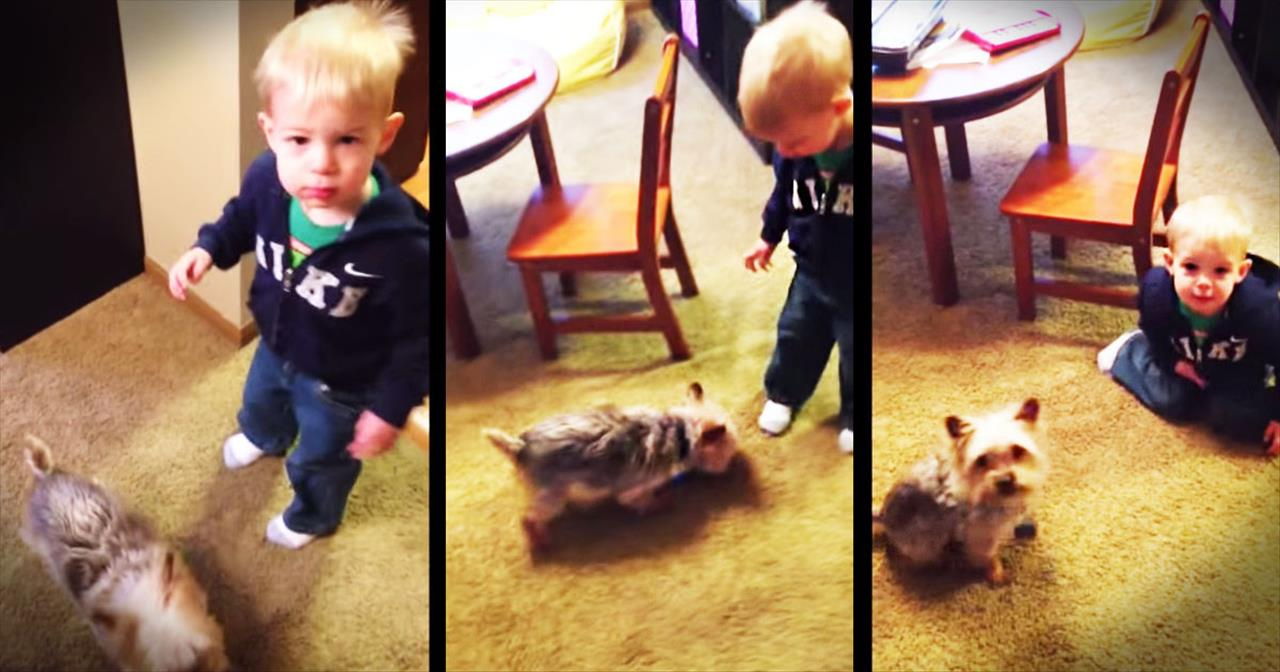 Little Boy Sits On Command When Dog Doesn't