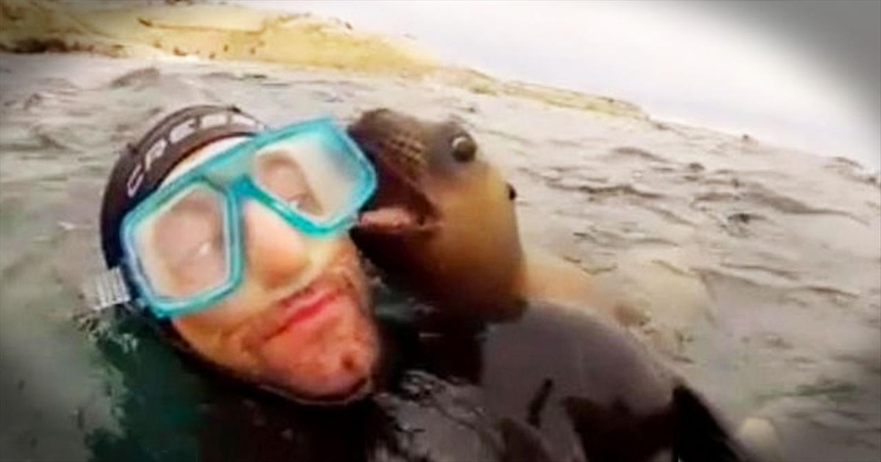 Precious Sea Lion Pups Play With Divers