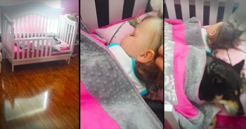 Mother Finds Dog And Baby Sleeping In The Crib Together