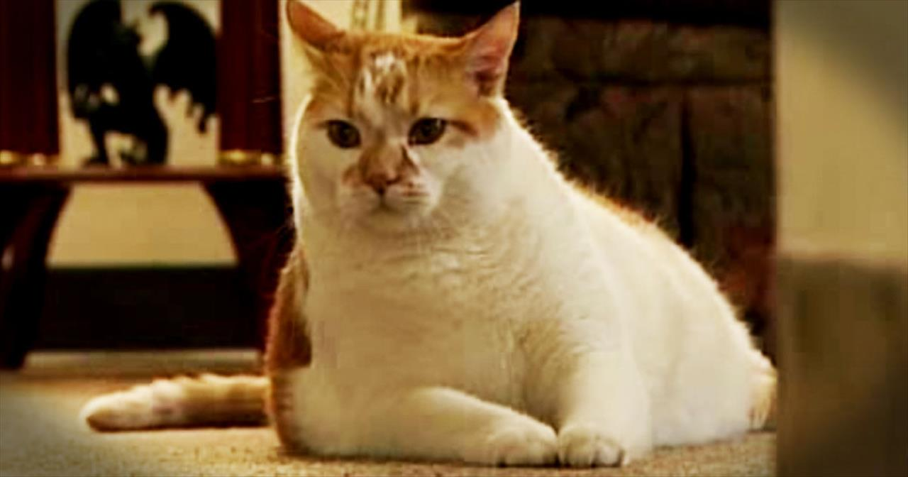 Rescue Cat Saves Owner's Life After Heart Attack