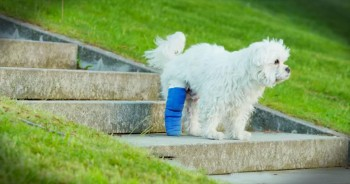 Injured Pup's Cast Was Holding Him Back. Until His Human Does Something AMAZING!