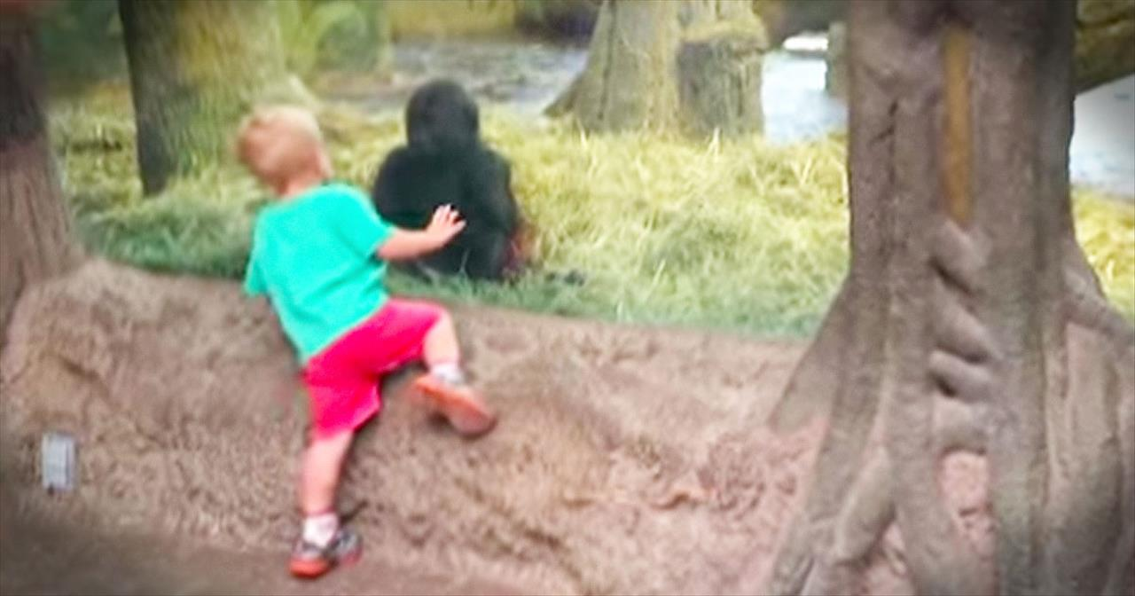 Toddler Has Adorable Playtime With Gorilla At The Zoo