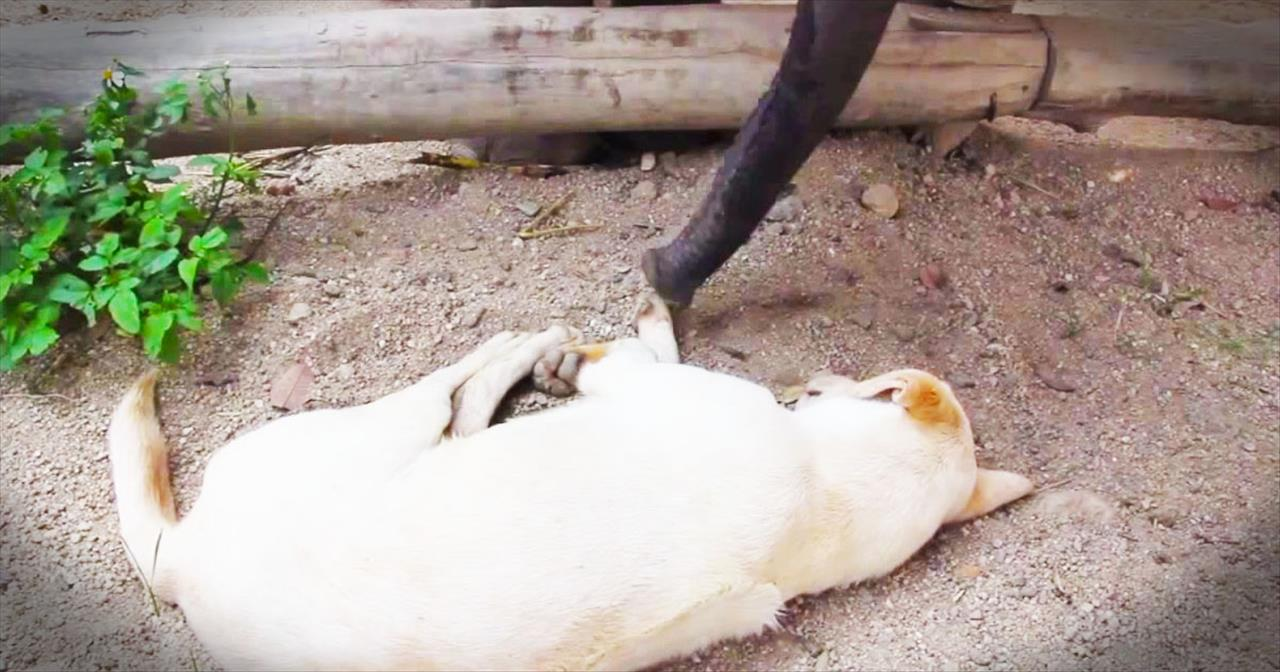 Baby Elephant Hilariously Tries To Wake Up Sleepy Dog