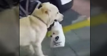 Momma Dog Gives CUTEST Definition To The Term 'Doggie Bag'