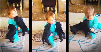 Adorable Pug Puppies Give Baby The Giggles