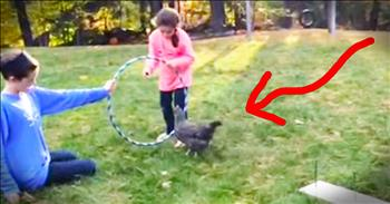 Well-Trained Chicken Completes Obstacle Course - LOL!
