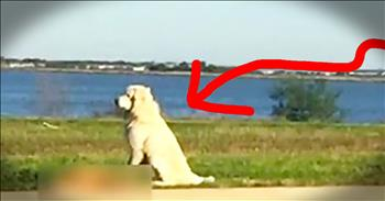 Dog Stands Vigil Over Friend's Dead Body