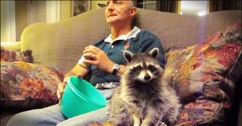 Tribute To This Late Raccoon Is Beyond Touching