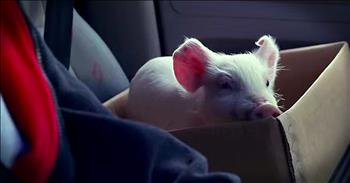 Stray Piglet's Journey Will Melt Your Heart