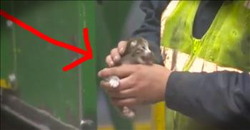 Tiny Kitten Is Rescued Seconds Before Being Crushed