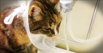 Cat Find The Silver Lining To A Post-Surgery Cone