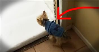 Pup's Reaction To Snow Is TOO Funny To Miss!