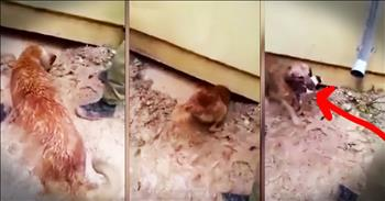 Dog Heroically Saves Her Puppies From Flood
