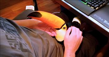 Toucan Acting Like A Dog Will Make Your Day!