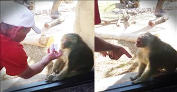 Baboon's Reaction To Magic Trick Is Hilarious!