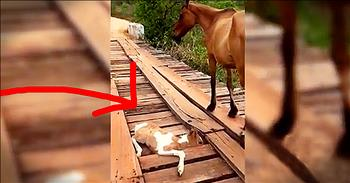 Kind Stranger Helps Rescue Baby Horse Trapped On Bridge