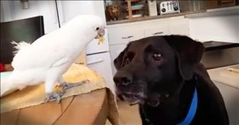 Cockatoo Helps Feed Dog Best Friend