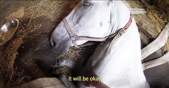 Horse Trapped In Maintenence Pit Gets Amazing Rescue