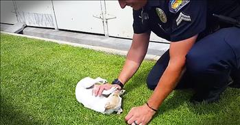 Pup Saved From Drug Den Reunites With Rescuer Police Officer